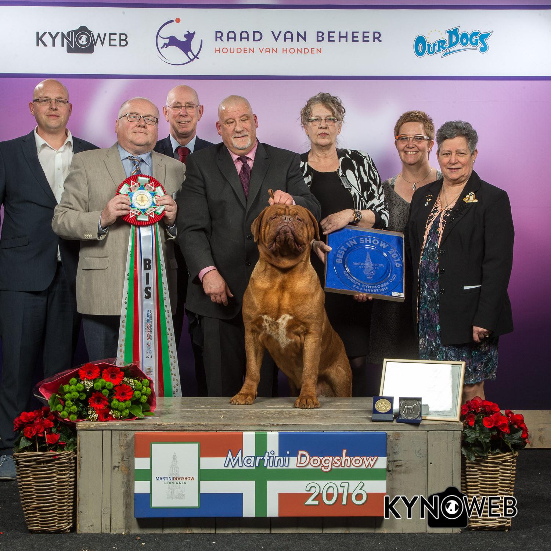 Best in Show (BIS) - BIS CACIB «Martini Dog Show» Groningen (The Netherlands), 5 - 6 March 2016