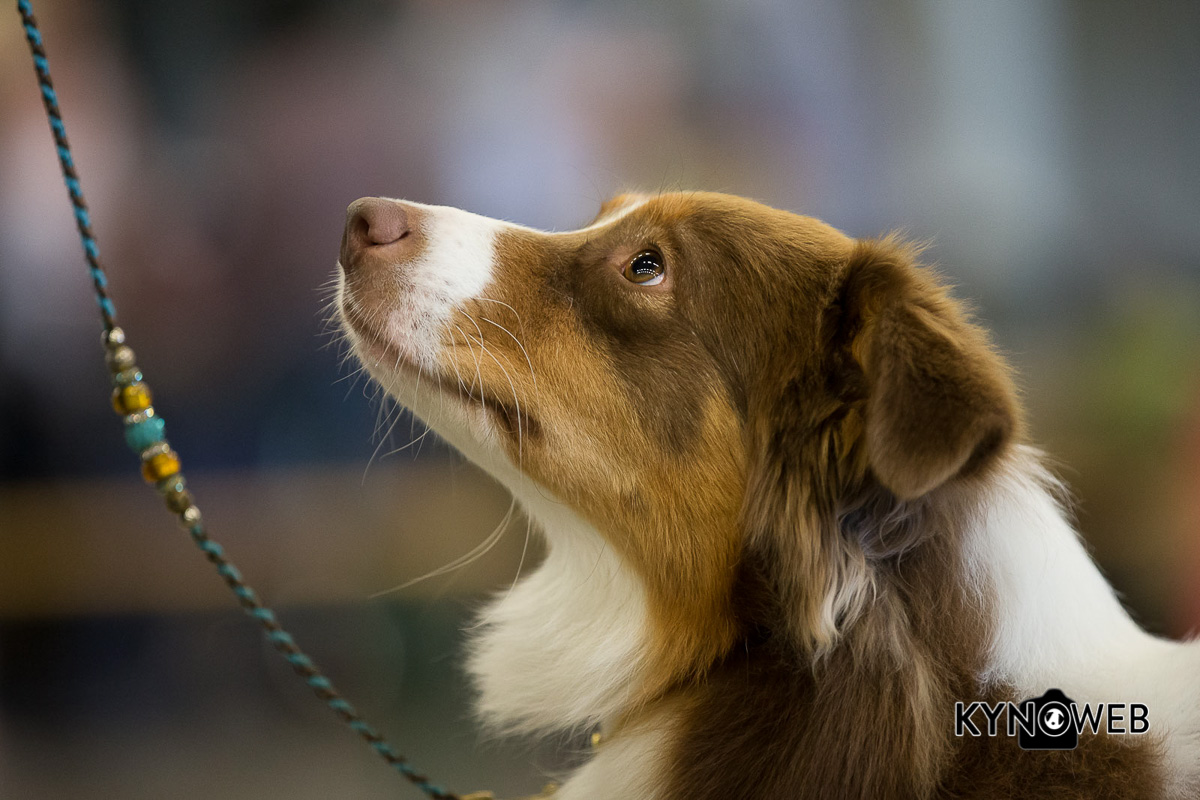 Dogshow Rotterdam 2015