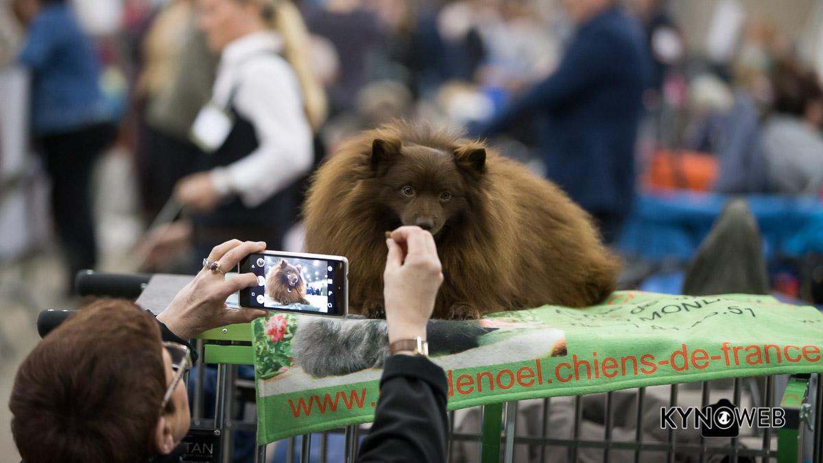 Dogshow_Rijland_2017_Kynoweb_Kynoweb-Ernst-von-Scheven_20170415_12_39_24