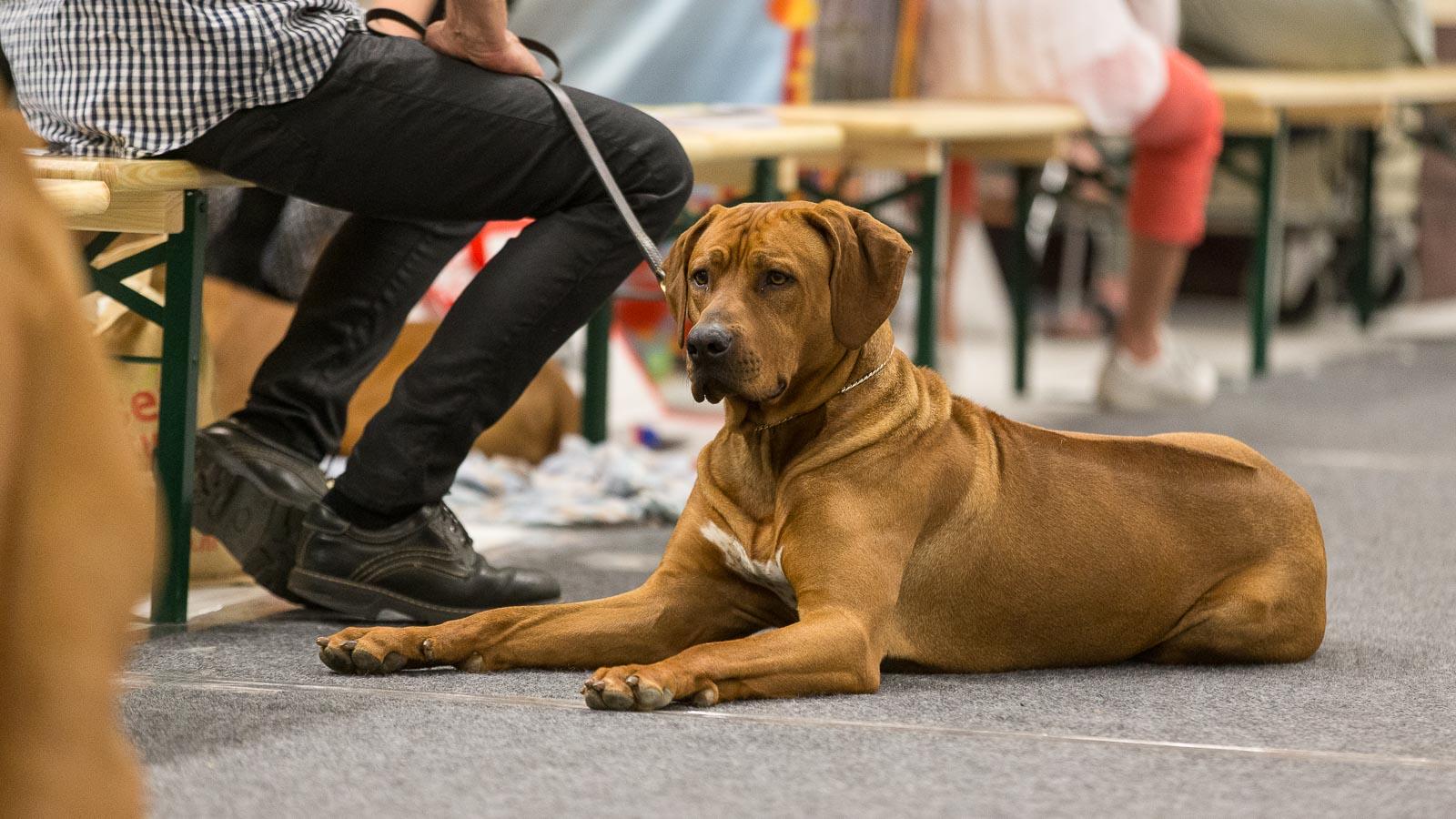 dogshow_oss_Kynoweb-20170527-10-11-25-KY2_2502-203019001225-