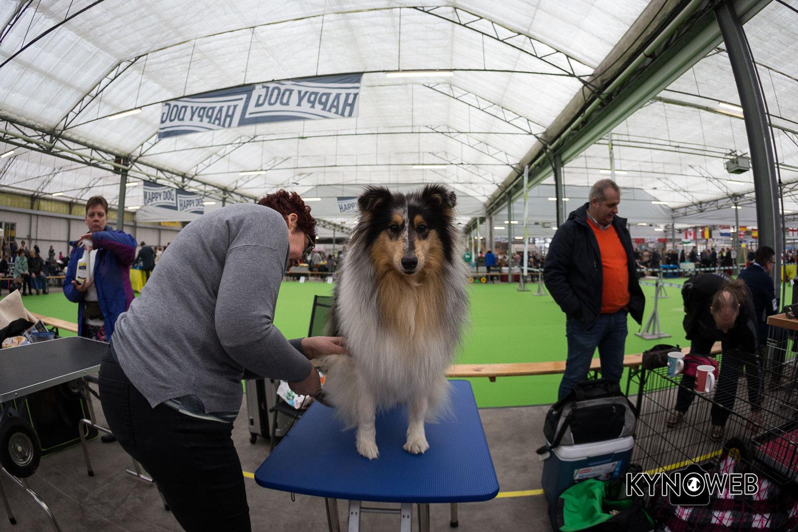 Dogshow_Rijland_2018_Kynoweb__20180317_09_22_45