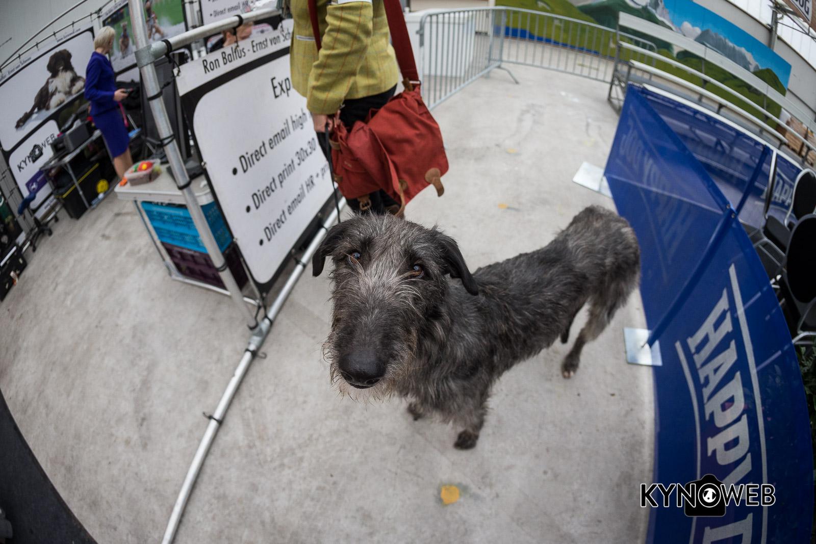 Dogshow_Rijland_2018_Kynoweb__20180317_09_47_27