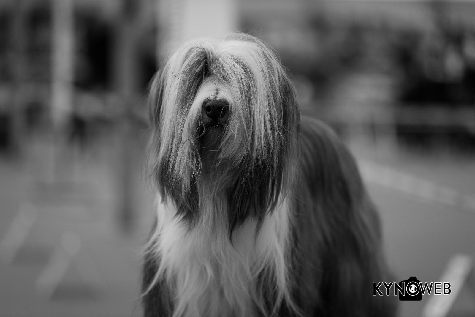 Dogshow_Rijland_2018_Kynoweb__20180317_12_15_13-2